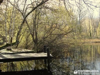 Bosque de Finlandia - Valle de El Paular;club de montaña de madrid campamentos de la comunidad de m